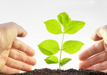hands gardening seedlings to soil