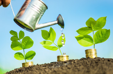 money growth and investment concept