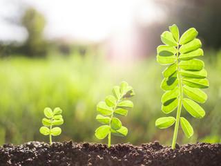 green seedling plants growing