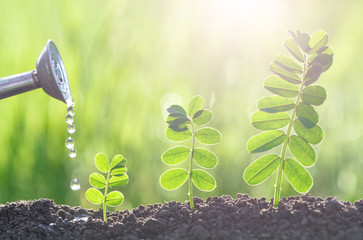 a watering and gardening seedlings growth nature concept