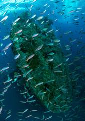 "Amazing underwater world - ""LIberty"" wreck. Tulamben, Bali, Indonesia."
