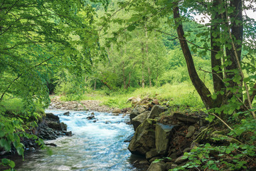 small creek with rocky shore in the forest. trees and boulders on the riverbank. beautiful nature scenery in springtime