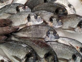 Delicious fresh Sea Bream fish on ice in fish market in Portugal. Close up.