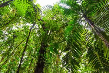 Green trees in Basse Terre jungle seen from below