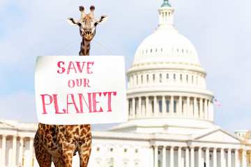 Animal giraffe with sign Save our planet
