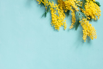 Blue background with mimosa branch for spring holidays Wall mural