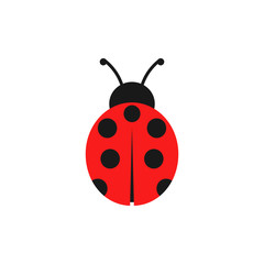 Ladybug illustration. Vector. Isolated.