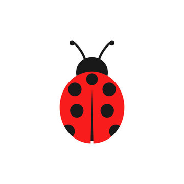 Ladybug illustration. Vector. Isolated.