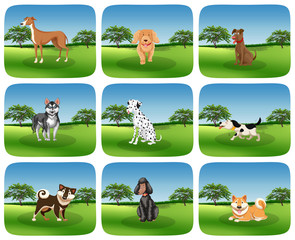 Set of dog breed in nature