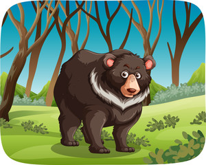 Black bear in nature scene