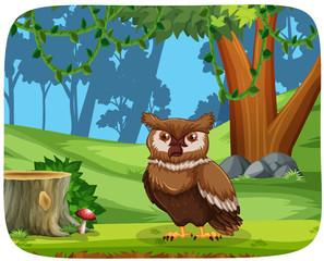 Owl in wood scene
