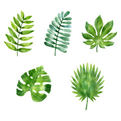 vector illustration leaf in watercolor style