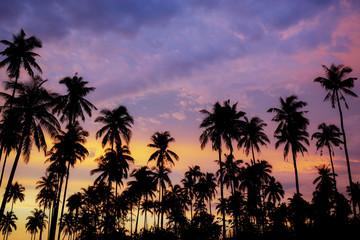 Palm tree at beautiful sky.