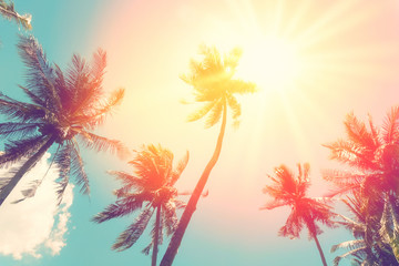 Foto op Canvas Palm boom Copy space of tropical palm tree with sun light on sky background.