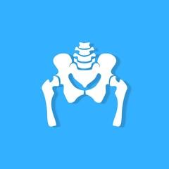 pelvic bone on blue background