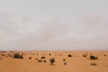 beautiful Arabian desert landscape