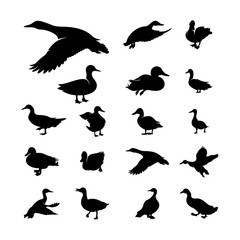 Set of Duck Silhouette collection vector illustration