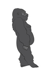 vector illustration of a gorilla, drawing color, vector