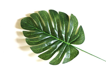 green leaf background. nature layout