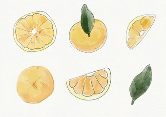 Set of watercolor fruits isolated on white background