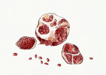 Watercolor pomegranate with seeds isolated on white