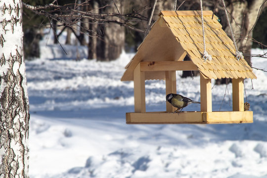 The dining room for birds