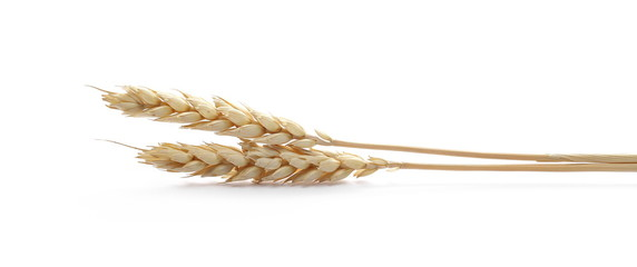 Dry wheat ears, grain isolated on white background