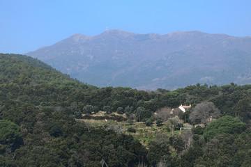 Paisaje con montañas y bosque de pinos