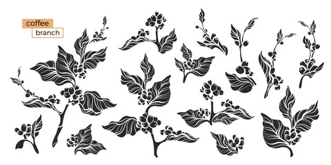 Set of coffee branch. Vector illustration