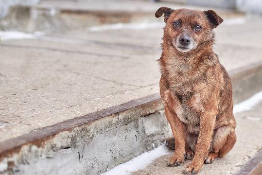 Unhappy stray dog with sad eyes on a city street