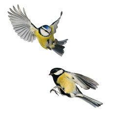 Fototapeta two birds tit and blue tit flying isolated on white background in various poses and types