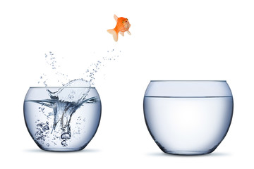 gold fish change move career opportunity rise concept jump into other bigger bowl isolated on white background Wall mural