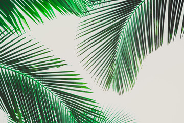 Coconut palm tree foliage. Vintage background. Retro toned poster.