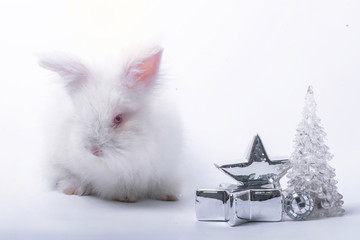 White baby rabbit with silver star and white crystal pine tree, white background, Easter holiday concept