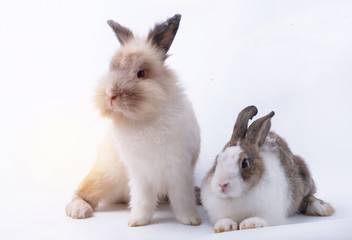 Two cute young rabbit on white background