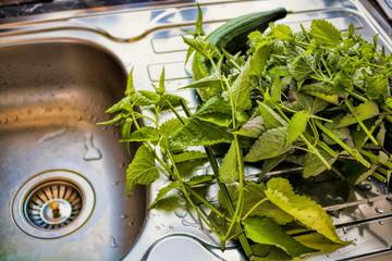 Frische Minze mit Salatgurke im Spühlbecken