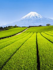 Fototapete - Berg Fuji und grüne Teefelder in Shizuoka, Japan