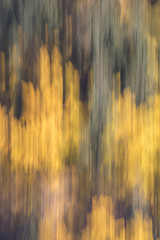 Autumn green and yellow colors abstract