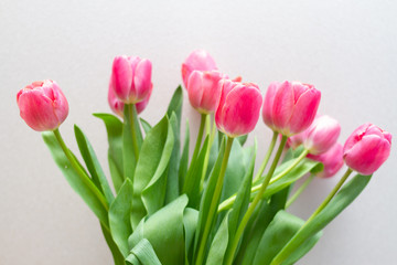 Fotobehang Tulp bouquet of tulips isolated on white