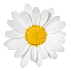 Poster Madeliefjes Lovely white Daisy (Marguerite) isolated on white background, including clipping path. Germany
