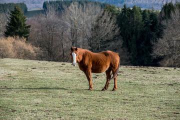 un cheval au milieu du pré