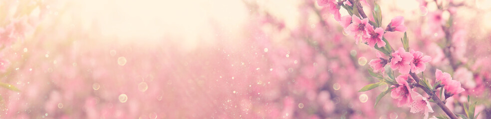 Obraz abstract and dreamy banner background of of spring blossoms tree with pink flowers. selective focus. glitter overlay - fototapety do salonu