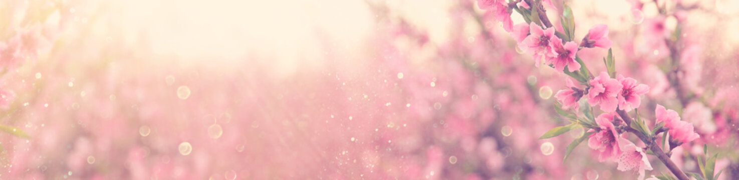 abstract and dreamy banner background of of spring blossoms tree with pink flowers. selective focus. glitter overlay