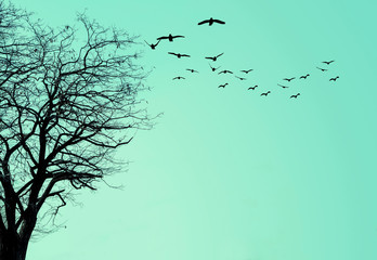 Photo sur Aluminium Vert corail The silhouette of the tree and a flock of birds on a turquoise background.