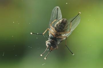 Fliege Unterseite