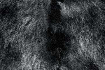 Natural bear fur texture. Real coat Wall mural