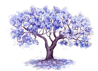 The Jacaranda Trees. Hand drawn sketch. Watercolor illustration