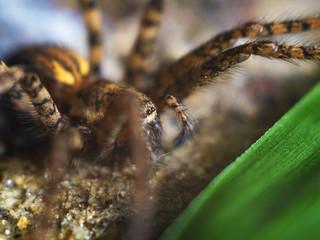 Detailed Spider Eyes macro