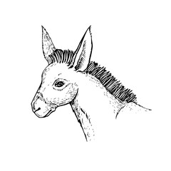 donkey head drawing side view