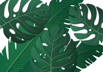 Tropical exotic banana leaves and monster on white background. Amazing leaf pattern.